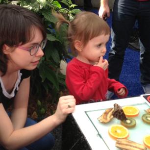 On regarde les papillons grignotter des fruits (non Mini Puce, c'pas pour manger!)