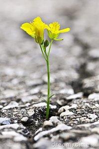 http://thumbs.dreamstime.com/x/horticulture-de-la-fissure-en-asphalte-6515384.jpg